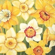 Servietter Daffodils Fields Lunch 20 pk